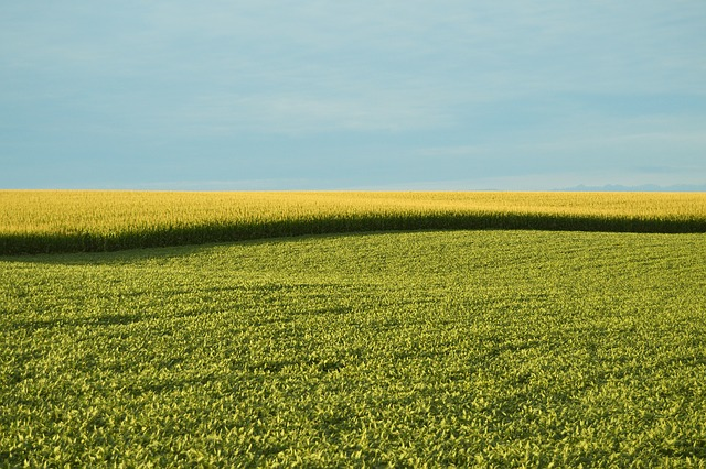 GMO-Free Food Sales Gain Increasingly Popularity Public Awareness