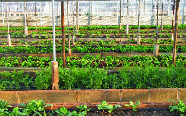 How Safe Is  Urban-Grown Food?