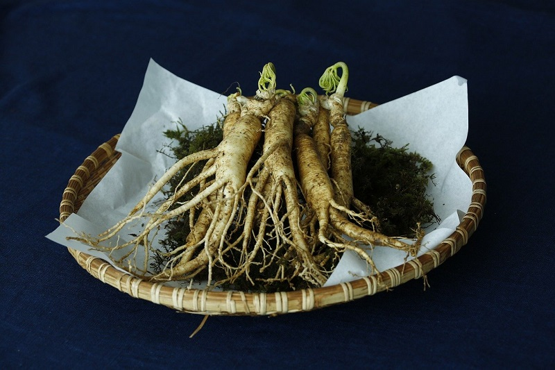 Ginseng Coreano is the leader when it comes to medicinal ingredients and effects