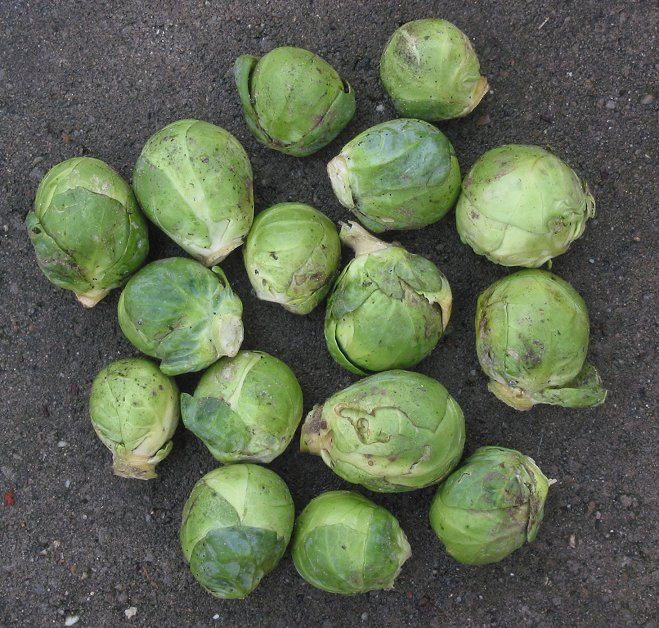 Folic acid in kale